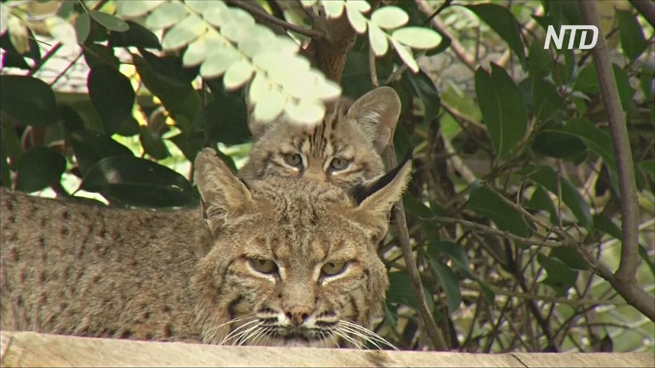 WWF: дикие животные исчезают очень быстро из-за вырубки лесов под поля