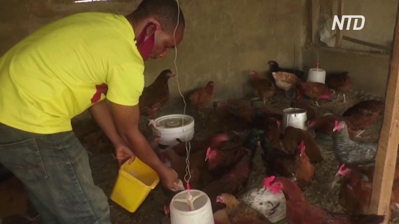 Нигерия стоит на пороге продовольственного кризиса
