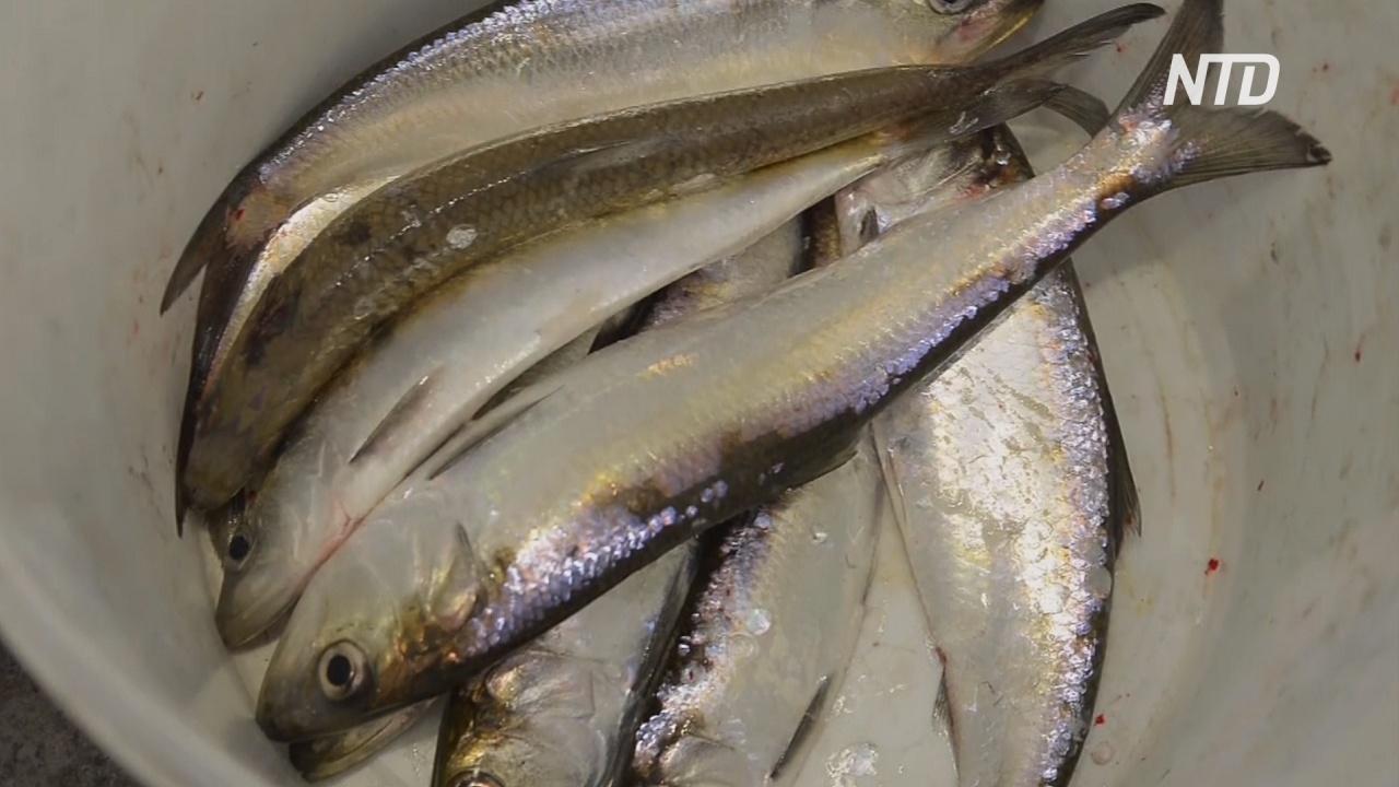 Легендарный рыбацкий фестиваль прошёл в Астрахани