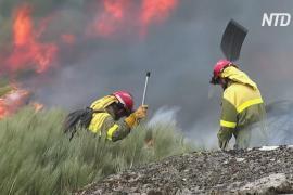 В Галисии полыхают лесные пожары