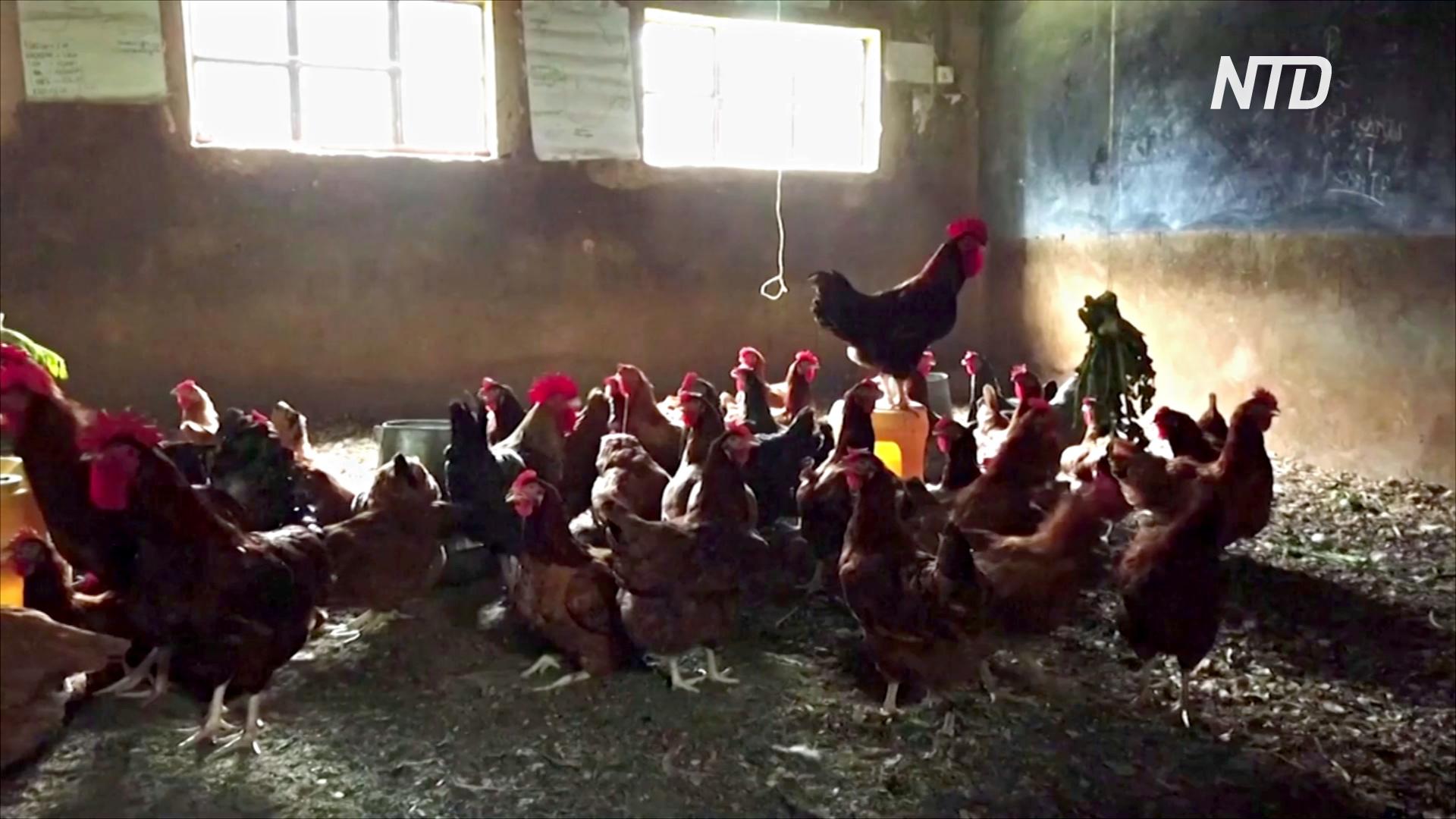 В Кении из-за пандемии школы превращаются в фермы