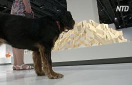 Архитектуру для собак показали на выставке в Лондоне