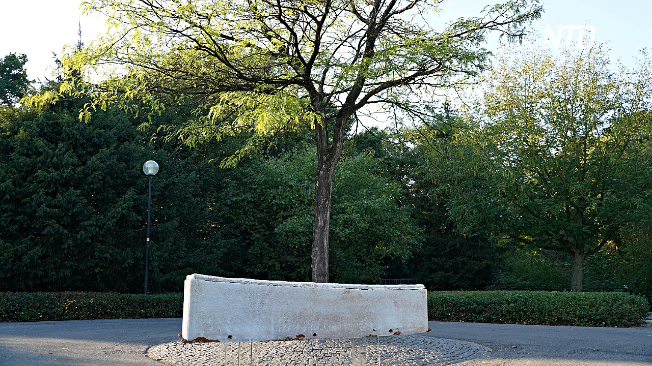 Гробы из грибов: в Нидерландах предлагают экологичные похороны