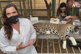 Бразильские волонтёры спасают животных, страдающих от пожаров в Пантанале