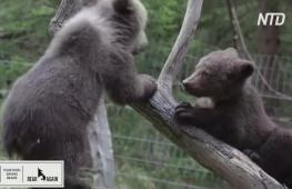 Румынский приют показывает видео с медвежатами-сиротами в обмен на помощь