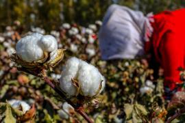 США прекращают импорт помидоров и хлопка из китайского региона Синьцзян