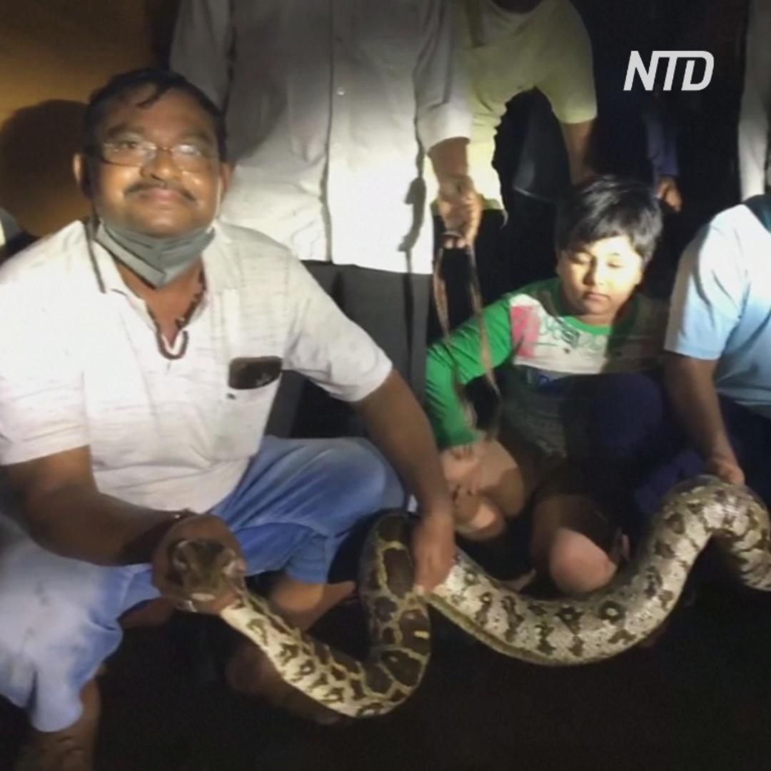 Двухметрового питона нашёл индиец под своей машиной