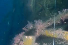 Американскую подлодку времён второй мировой нашли в водах Малайзии