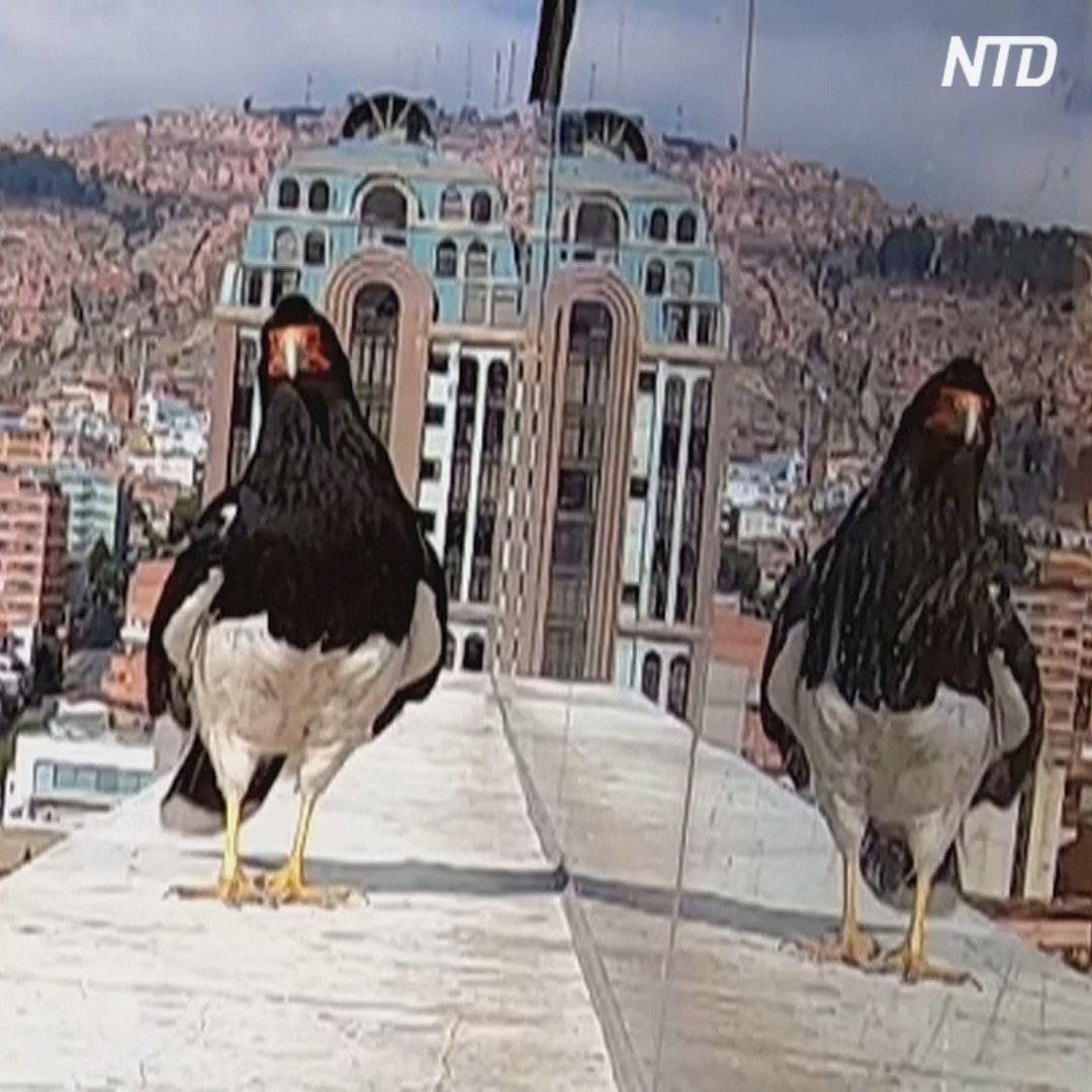 Как хищные птицы помогли семье пережить изоляцию