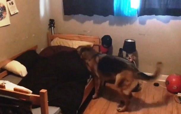 Novyj risunok 2 6 - Как собака будит детей каждое утро. Весёлое видео