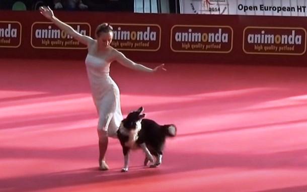 Может ли собака повторить балетные па? Весёлое видео
