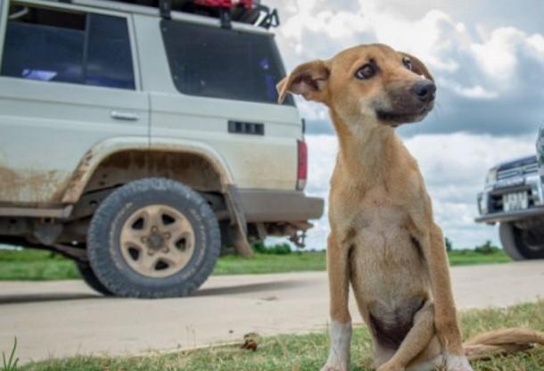 Щенок, который не может ходить, нашёл друзей в Австралии