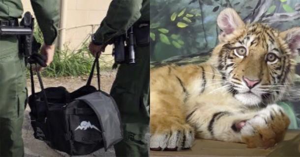 Что обнаружил пограничный патруль в сумке нарушителей