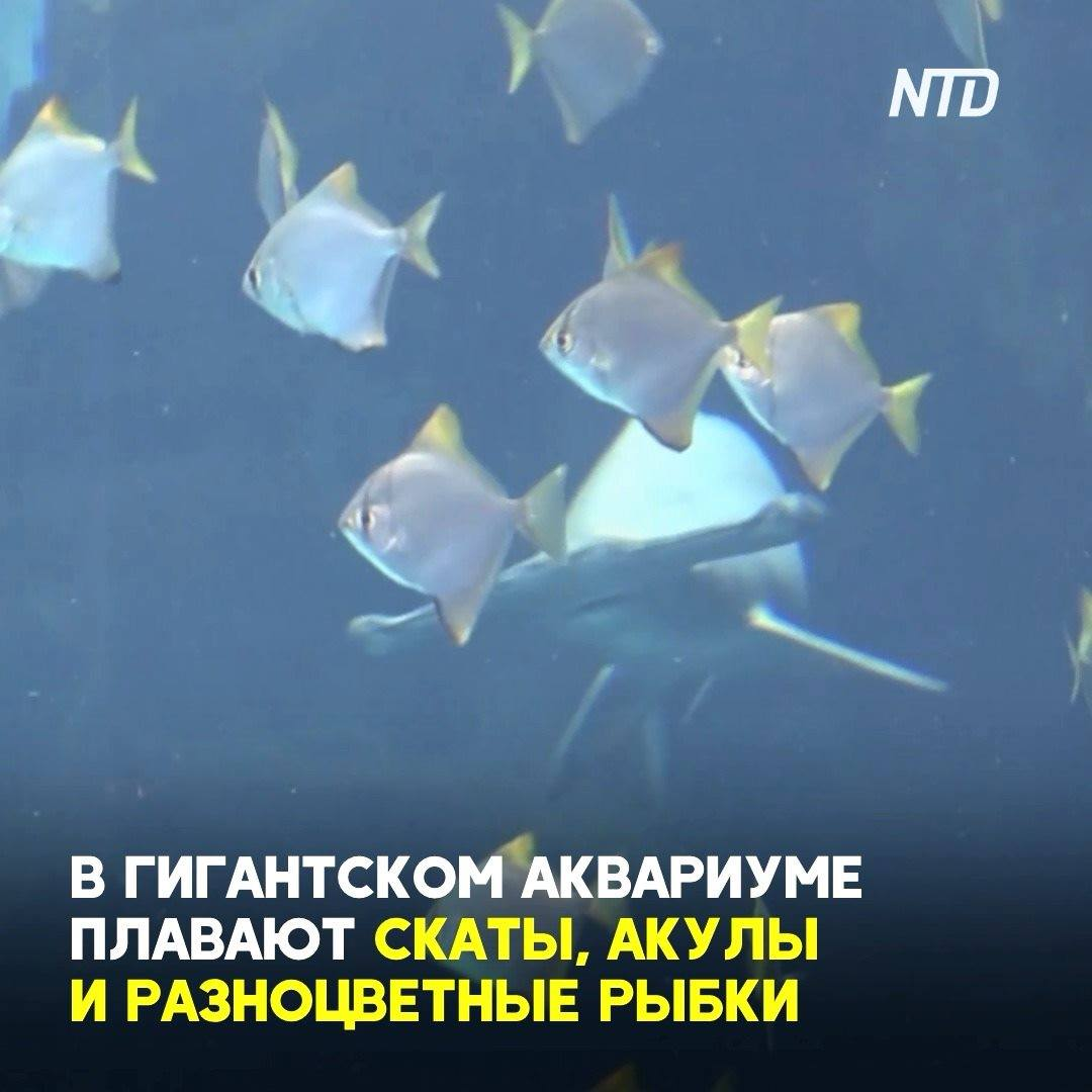 В тайваньском отеле-аквариуме в прозрачных тоннелях плавают пингвины