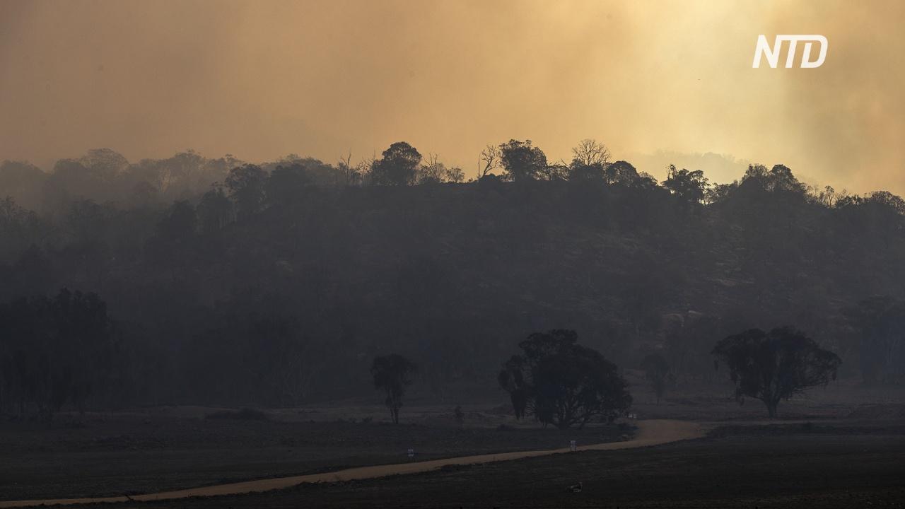 Лесные пожары в Боливии уничтожили более миллиона гектаров территории