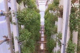 Ферма и пруд в грузовых контейнерах: экобизнес в Гонконге