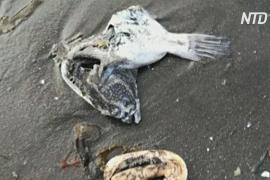 WWF: загрязнение у берегов Камчатки могло произойти из-за токсичного вещества