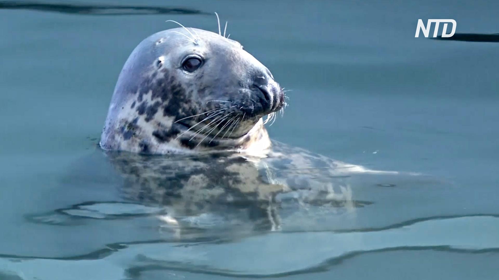 Слишком много тюленей: рыбаки в заливе Кейп-Код в США недовольны
