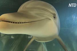 Сможет ли робот заменить дельфинов в парках развлечений?