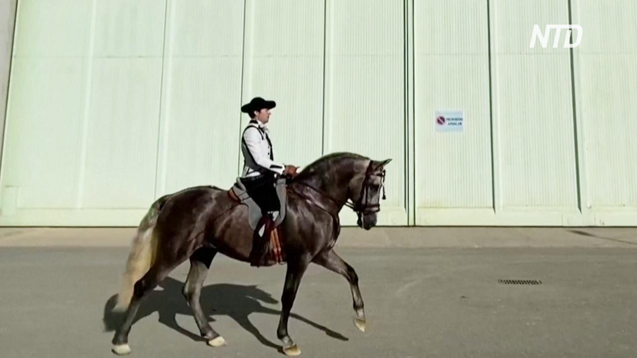 В Севилье прошла знаменитая выставка андалузских лошадей