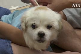Ветеринарная скорая помощь: как в Гонконге помогают кошкам и собакам
