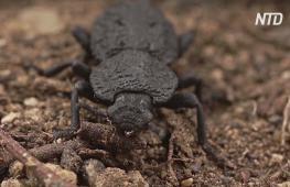 Поможет ли панцирь жука сделать стройматериалы крепче
