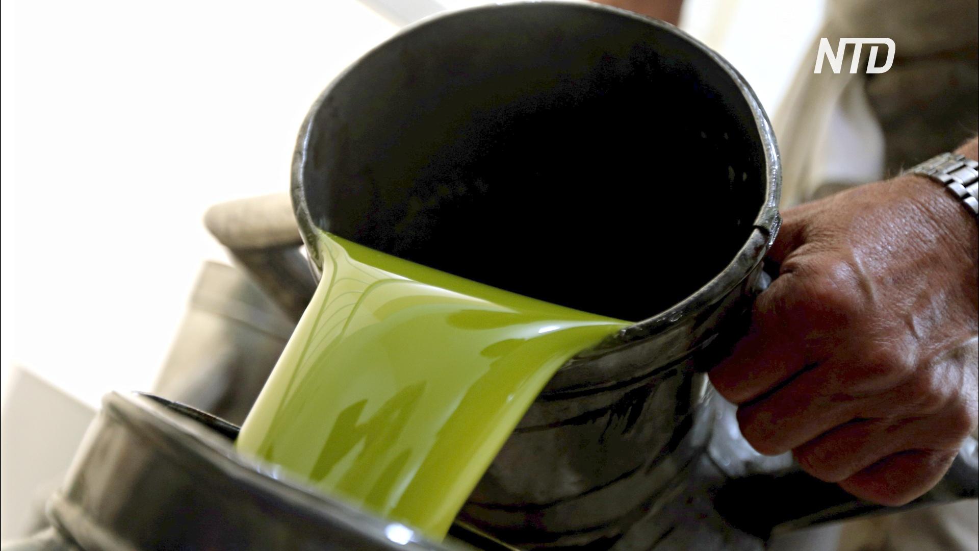 Берегись, Испания: Хорватия стремится выйти в лидеры по производству оливкового масла