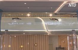 Пингвины в тоннеле и лампы-медузы: на Тайване работает отель-аквариум