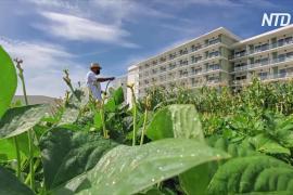 Кубинские отели привлекают туристов органической продукцией