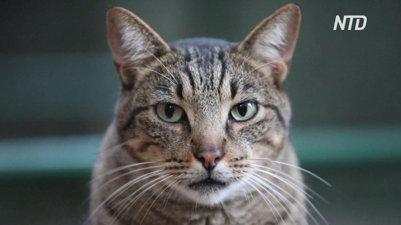 Кошачий приют в Барселоне из-за пандемии переполнен старыми кошками