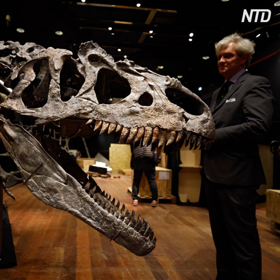 3 млн евро заплатили за скелет аллозавра на аукционе в Париже