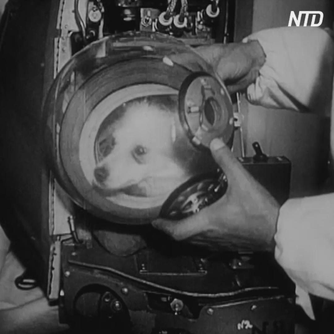Откуда первые собаки Дезик и Цыган полетели в космос