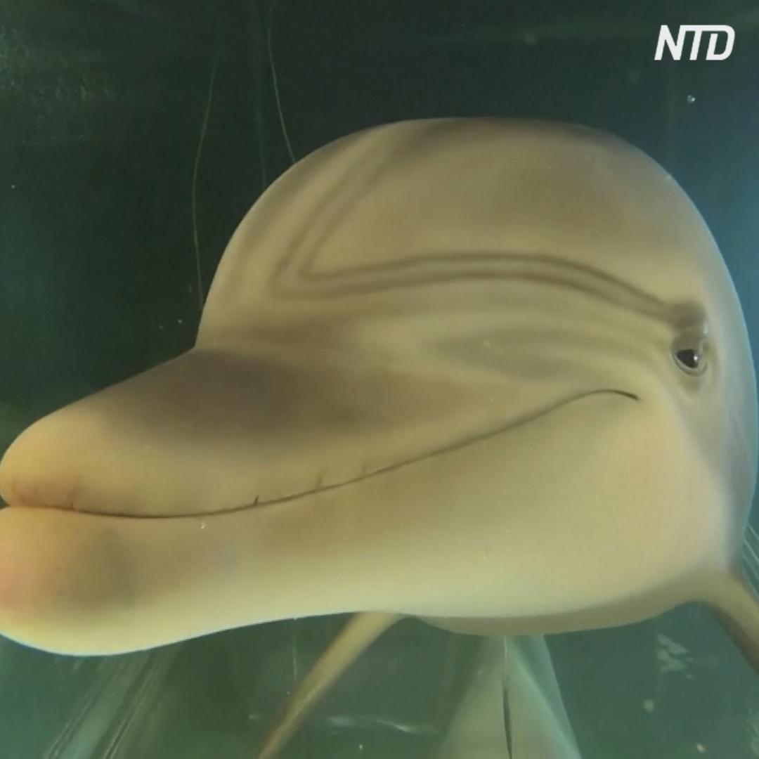 Робот-дельфин может изменить представления о водных парках развлечений