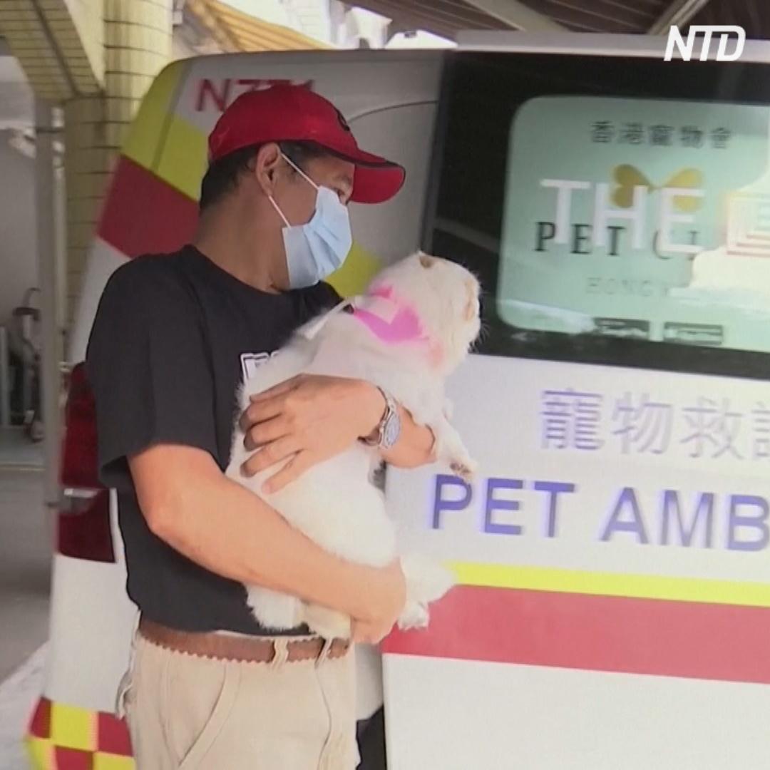 Ветеринарная скорая помощь спасает собак и кошек Гонконга