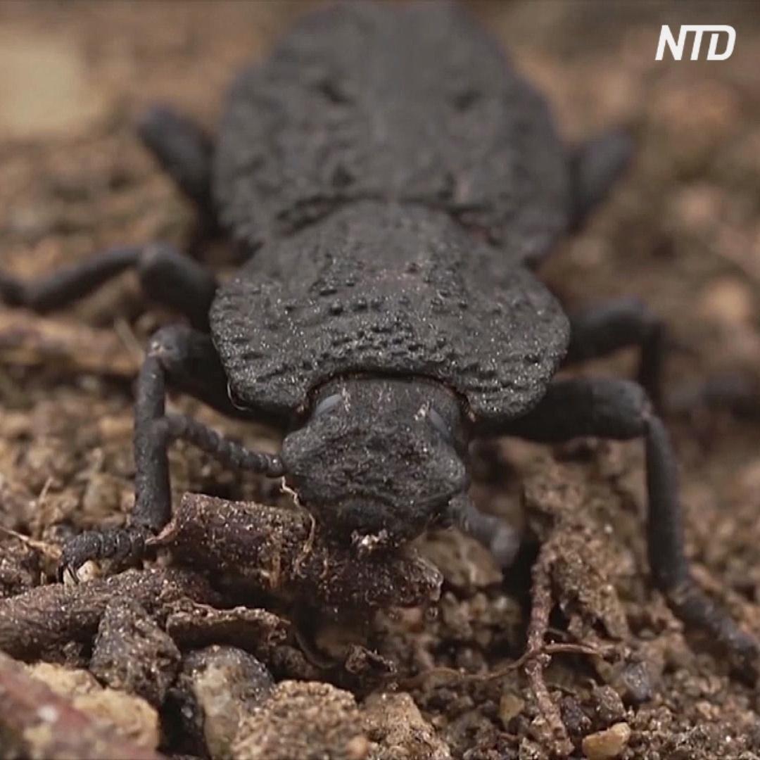 Сверхкрепкий панцирь жука поможет создавать прочные стройматериалы