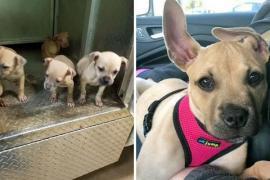Почему щенка назвали Синнабоном