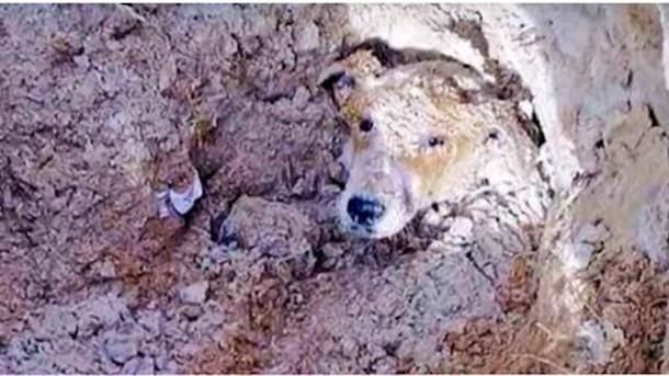 Собаку, которую закопали заживо, удалось спасти