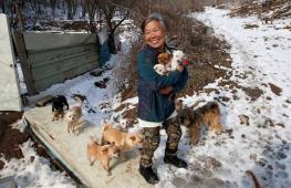 Женщина одна заботится о 200 собаках