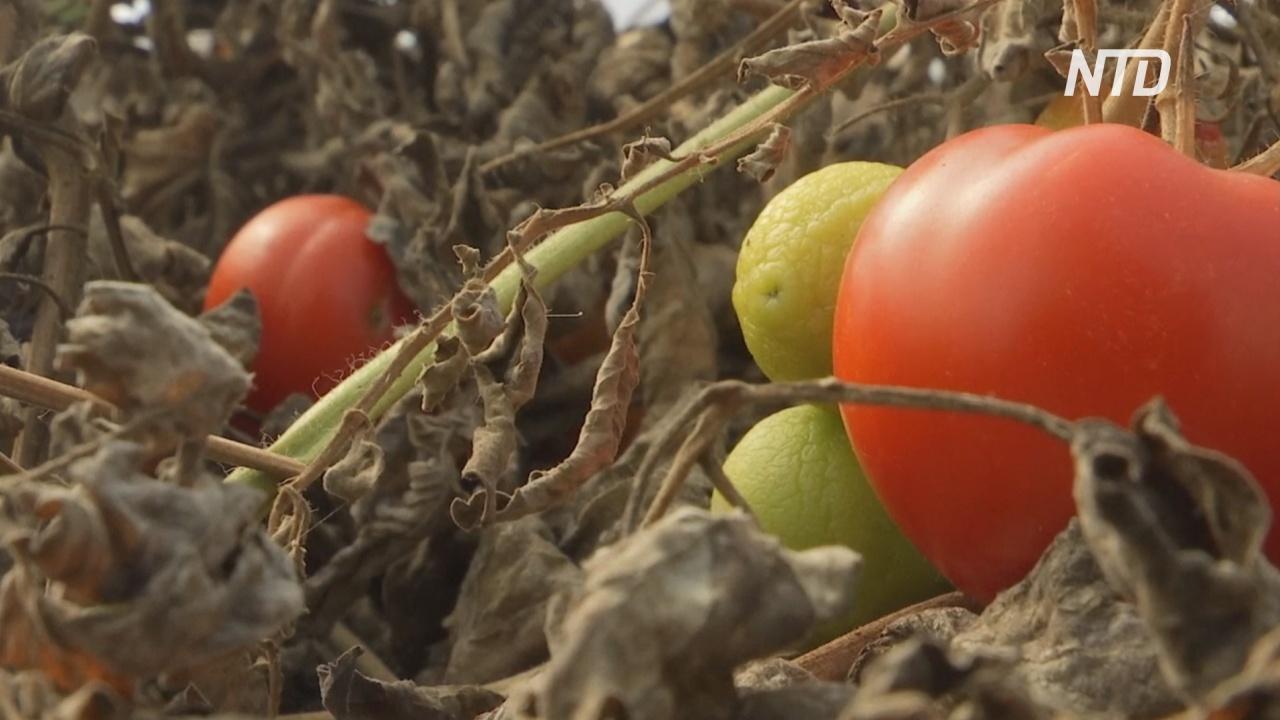 Вкусный суп из неказистых овощей: волонтёры в Косово спасают продукты