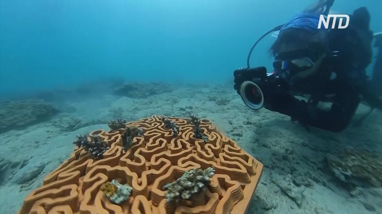 Глиняные плитки создают среду обитания для исчезающих кораллов