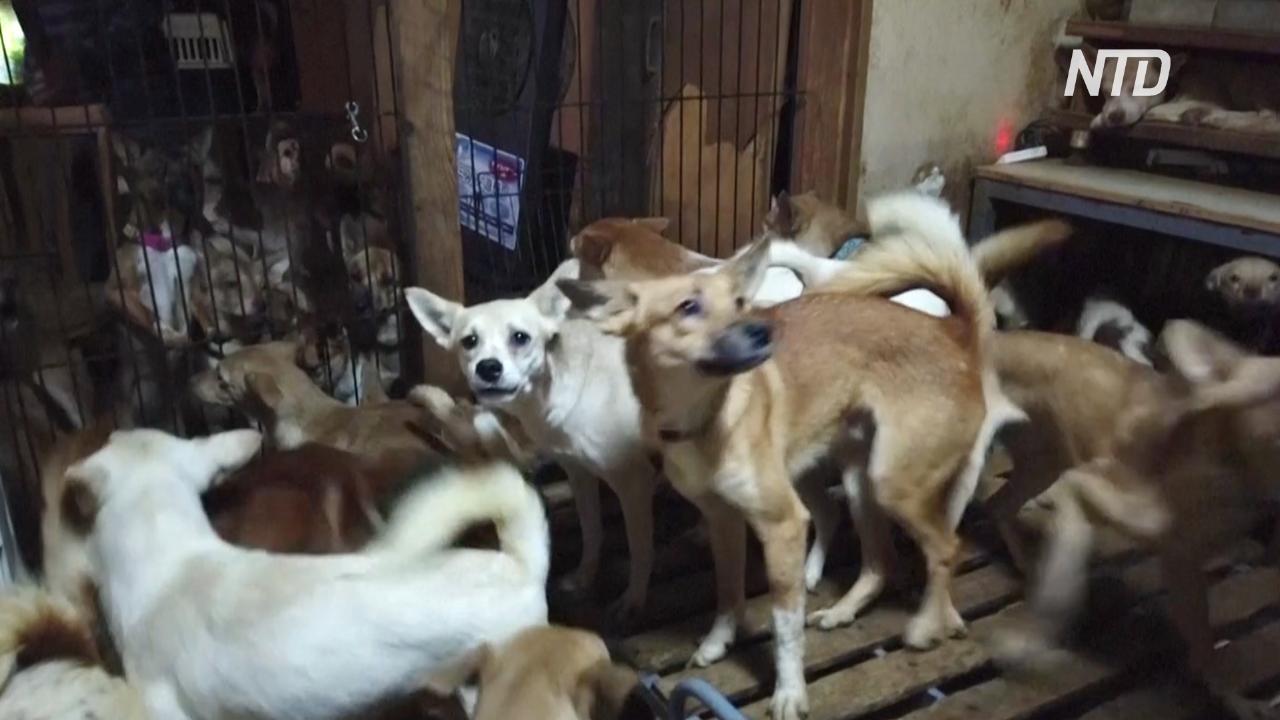 В Японии спасли более 160 собак, которых держали в тесноте и плохо кормили