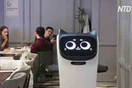 Робокот – новый помощник официанта сети кафе в Москве