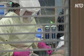 Заболевших COVID-19 в мире уже больше 50 млн