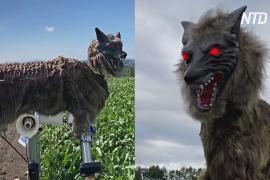 В Японии медведи выходят к людям, их отгоняет «Монстр-волк»