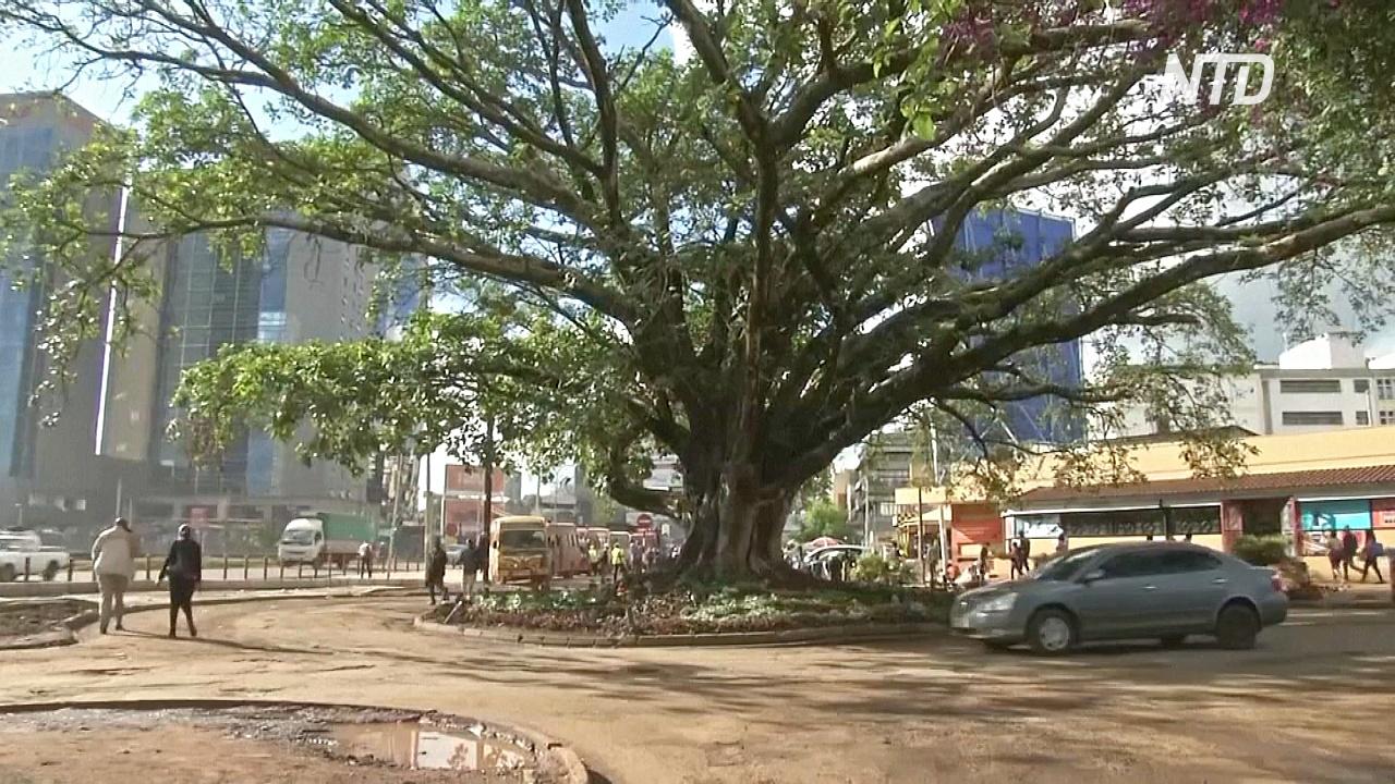 Президент Кении спас столетнее дерево от трассы, которую спонсируют китайцы