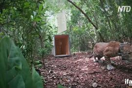 Ягуар вернулся в дикую природу, выжив после столкновения с машиной