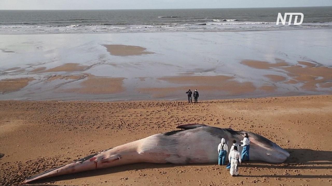 Морские биологи ищут причину гибели китов на западе Франции