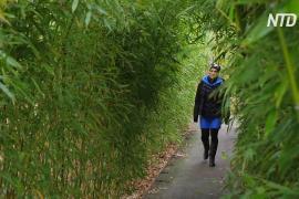 Сады мира в Берлине предлагают совершить кругосветное путешествие