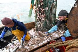 Квоты на вылов рыбы – один из камней преткновения в торговых отношениях после «брексита»