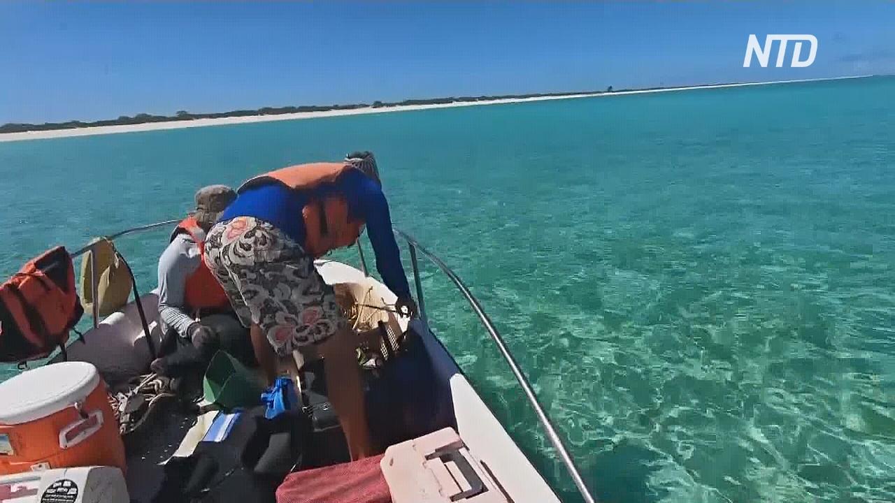 Волонтёры 8 месяцев пробыли на необитаемом острове и не знали, что началась пандемия